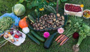 BOLOGNA, Corso di orto naturale per tutti